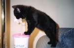 Atilla drinking from a straw when he was a kitten