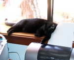 Atilla sleeping in the office window