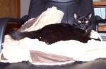Atilla on my coat, on Harold's chair