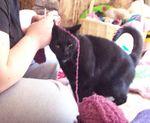 Atilla wants to help, too!