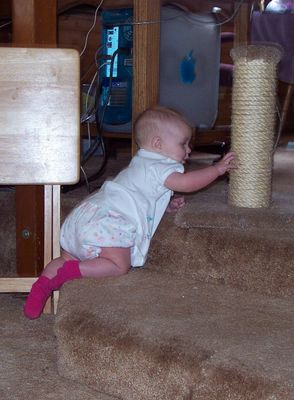 Climbing up the steps to get the cat's scratching post