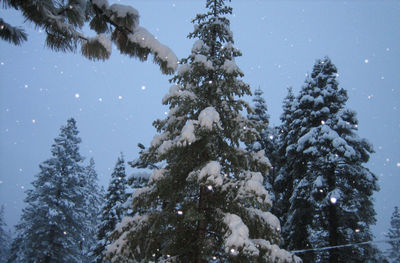 looking up from our deck at snowy trees